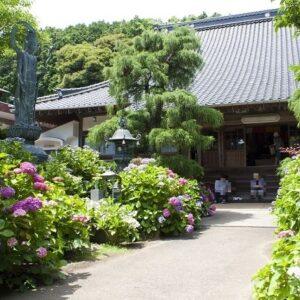 山口県のあじさいの名所おすすめ6選・あじさい寺や公園で梅雨の風情を楽しんで